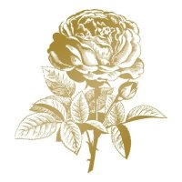 co725293-gopress-and-foil-couture-creations-foil-stamp-die-classic-rose
